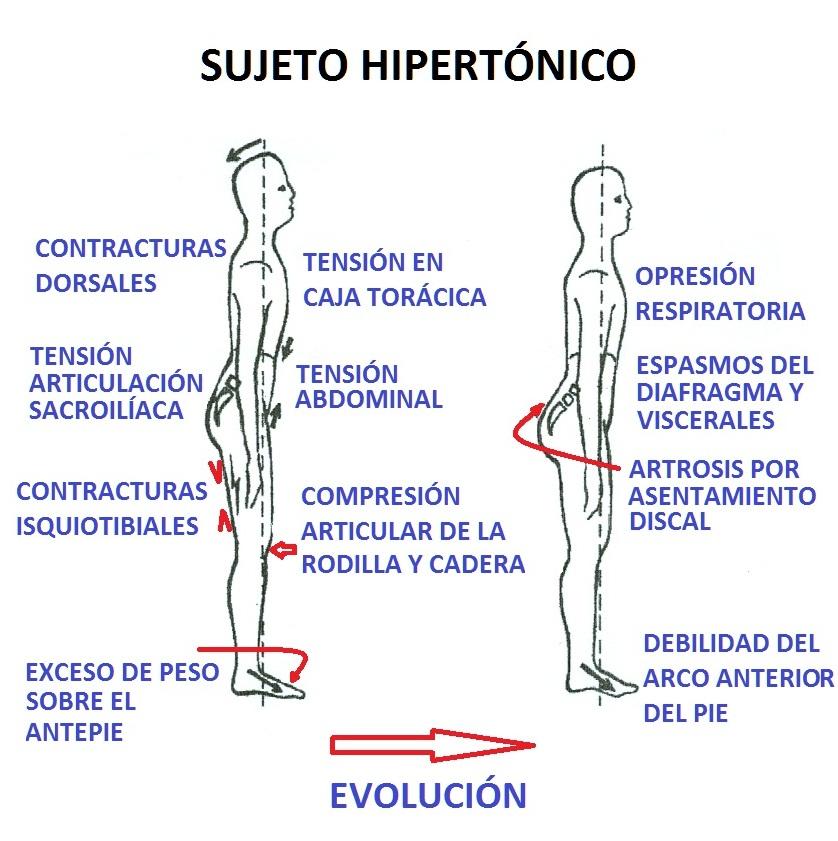 Osteopatía Visceral   Carlosteopata